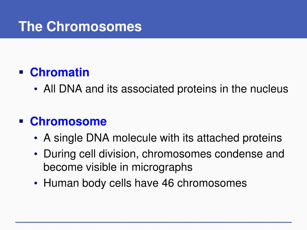 The Chromosomes