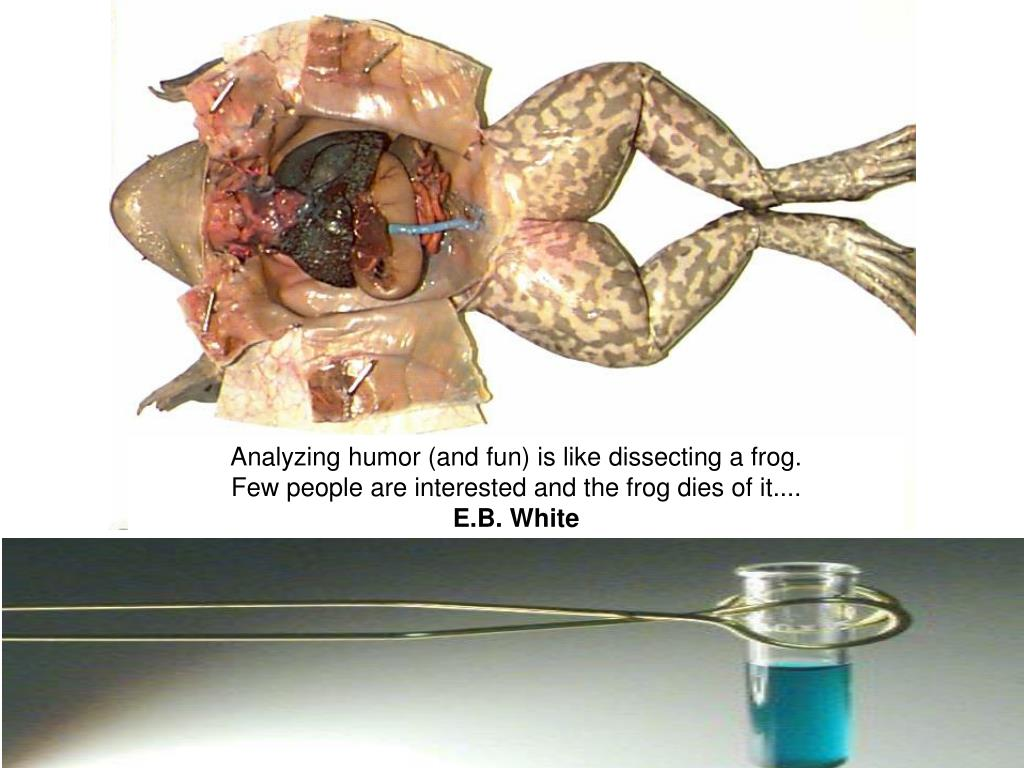 Analyzing humor (and fun) is like dissecting a frog.