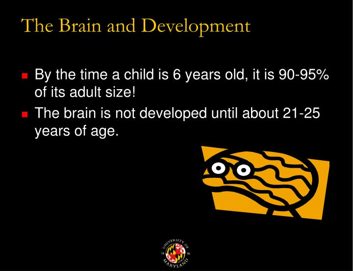 The brain and development