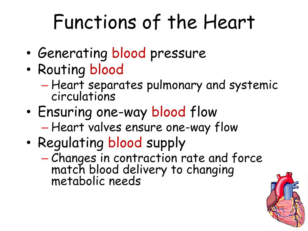 Trace The Pathway Of Blood Through The Body Using The Following Terms Aorta Right Atrium Left Atrium Right Ventricl furthermore 625703 besides Chest And Abdomen Radiology also Pericardium Anatomy besides Radiology Signs 49647194. on mediastinum of heart