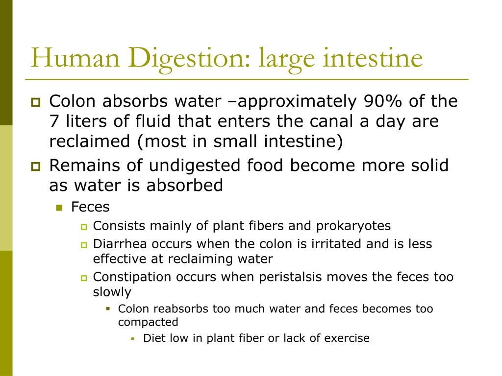 Human Digestion: large intestine