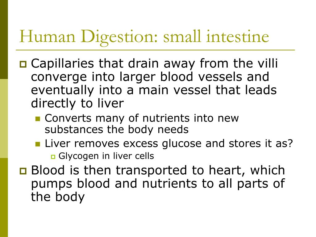 Human Digestion: small intestine