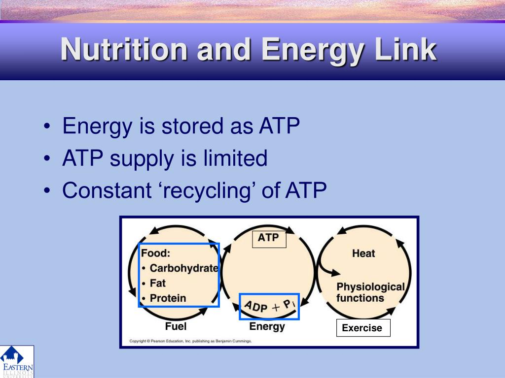 Nutrition and Energy Link