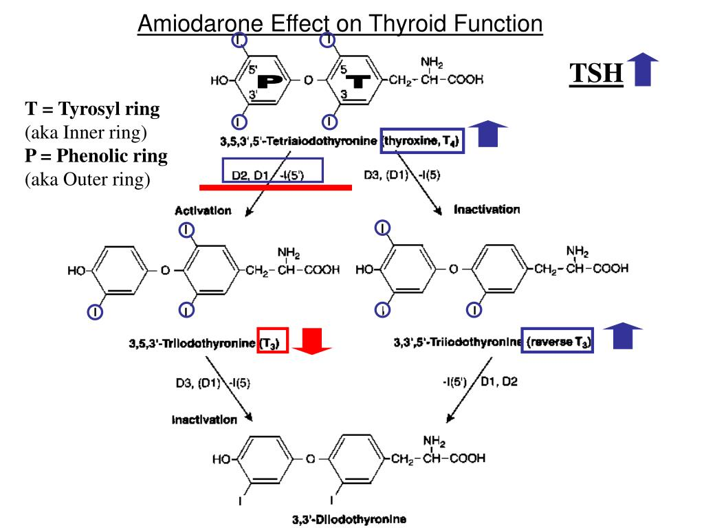Amiodarone Effect on Thyroid Function