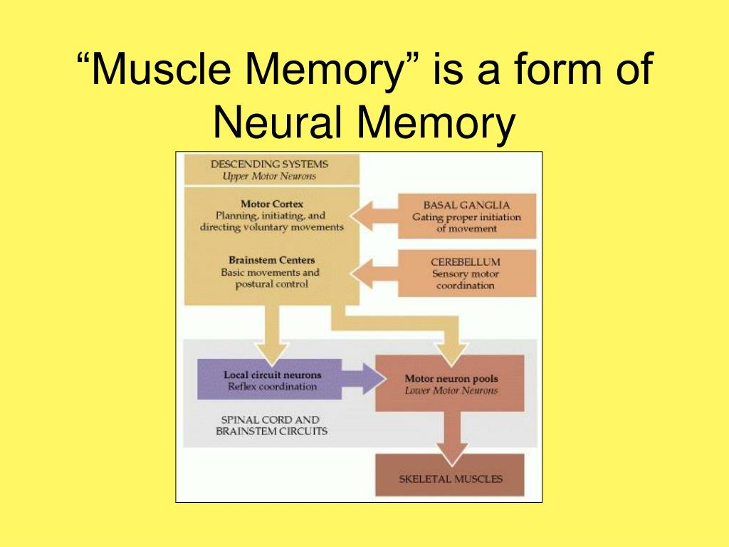 """""""Muscle Memory"""" is a form of Neural Memory"""