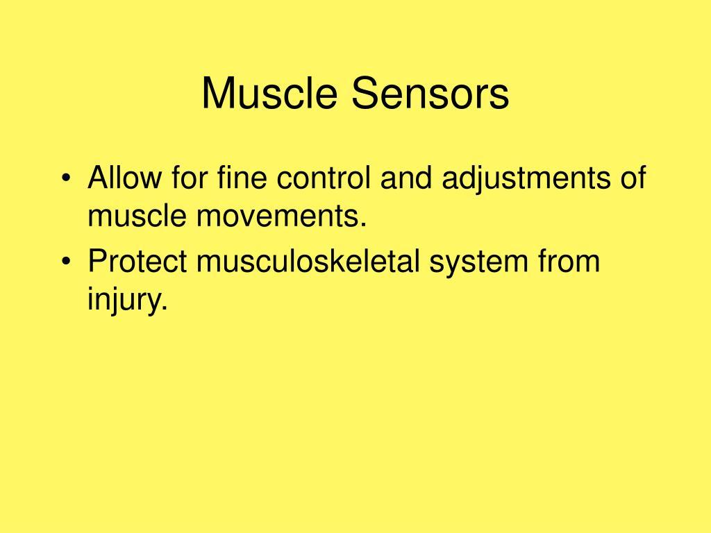 Muscle Sensors