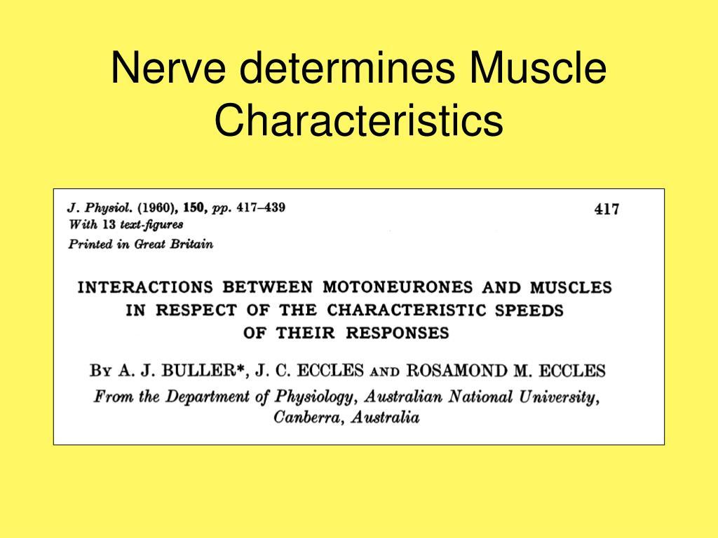 Nerve determines Muscle Characteristics