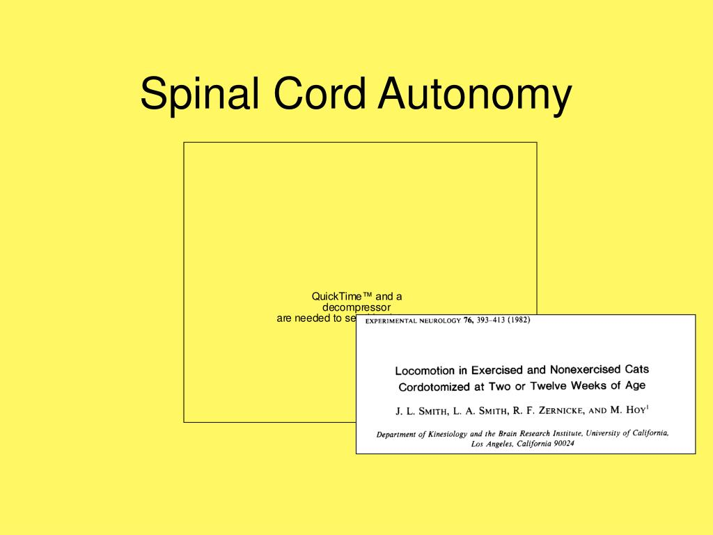 Spinal Cord Autonomy