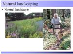 natural landscaping2