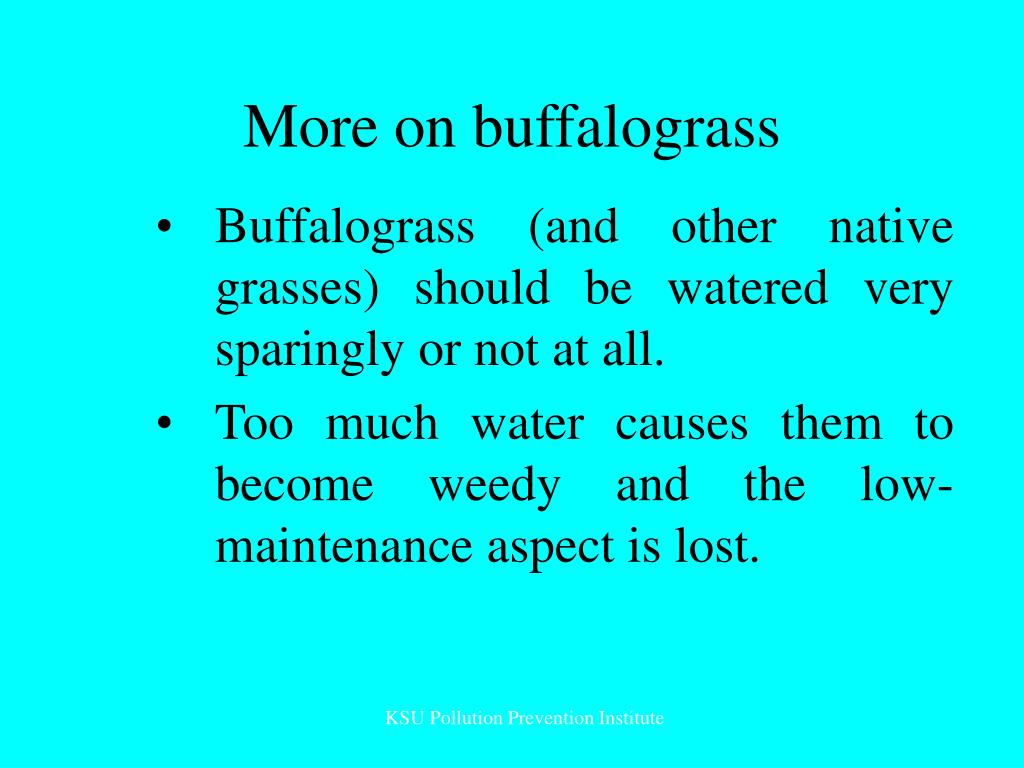 More on buffalograss