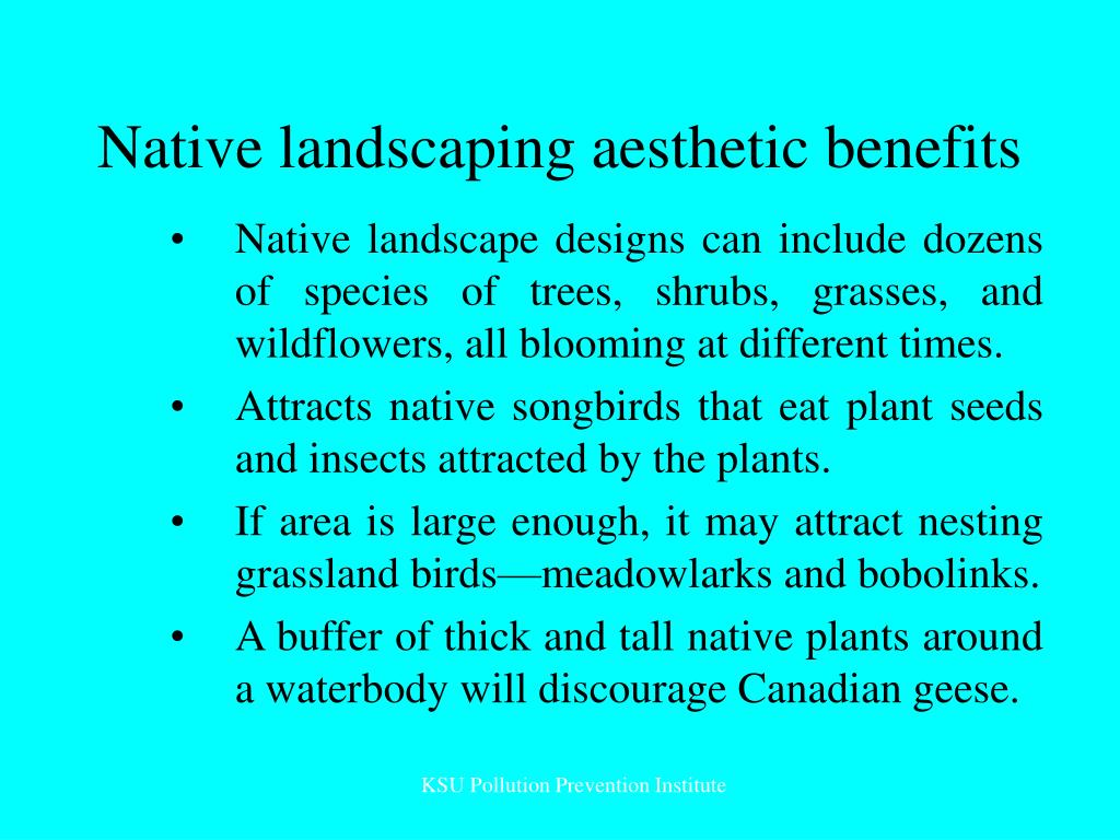 Native landscaping aesthetic benefits