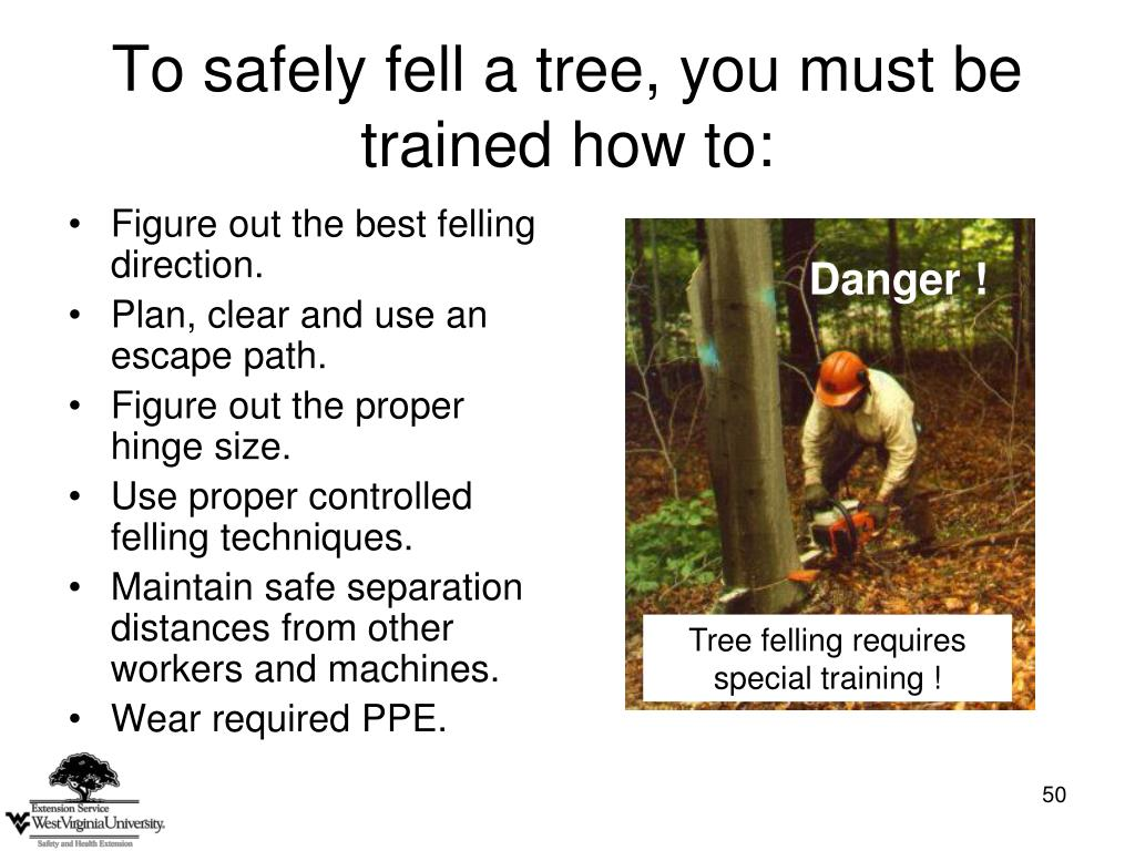 To safely fell a tree, you must be trained how to: