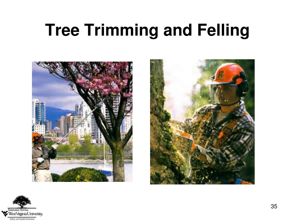 Tree Trimming and Felling