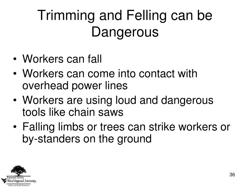 Trimming and Felling can be Dangerous