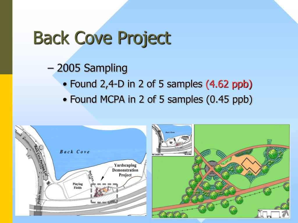 Back Cove Project