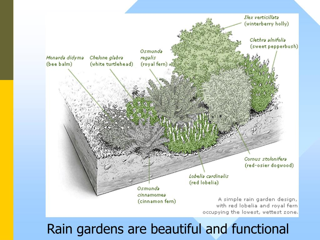 Rain gardens are beautiful and functional