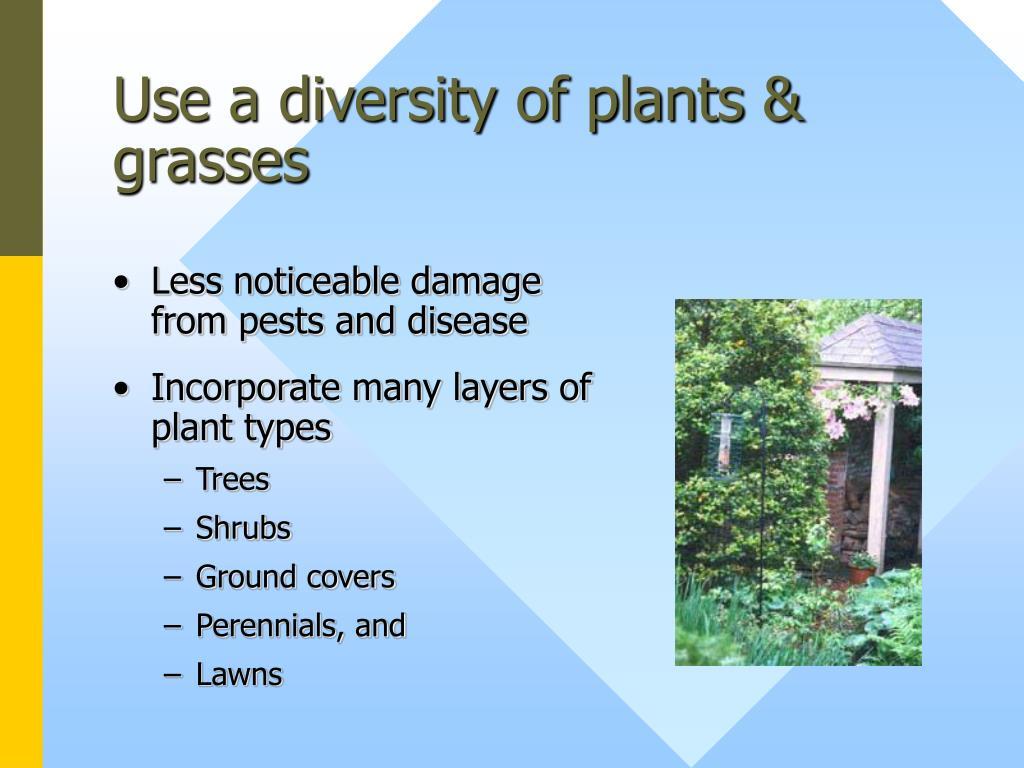 Use a diversity of plants & grasses