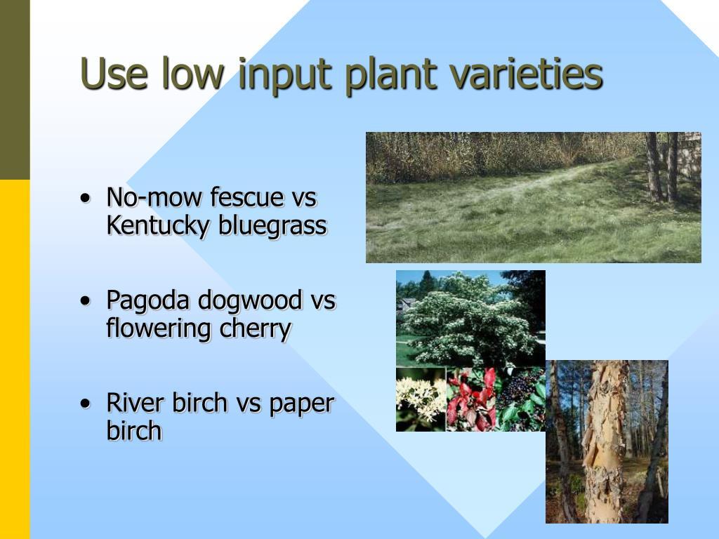 Use low input plant varieties
