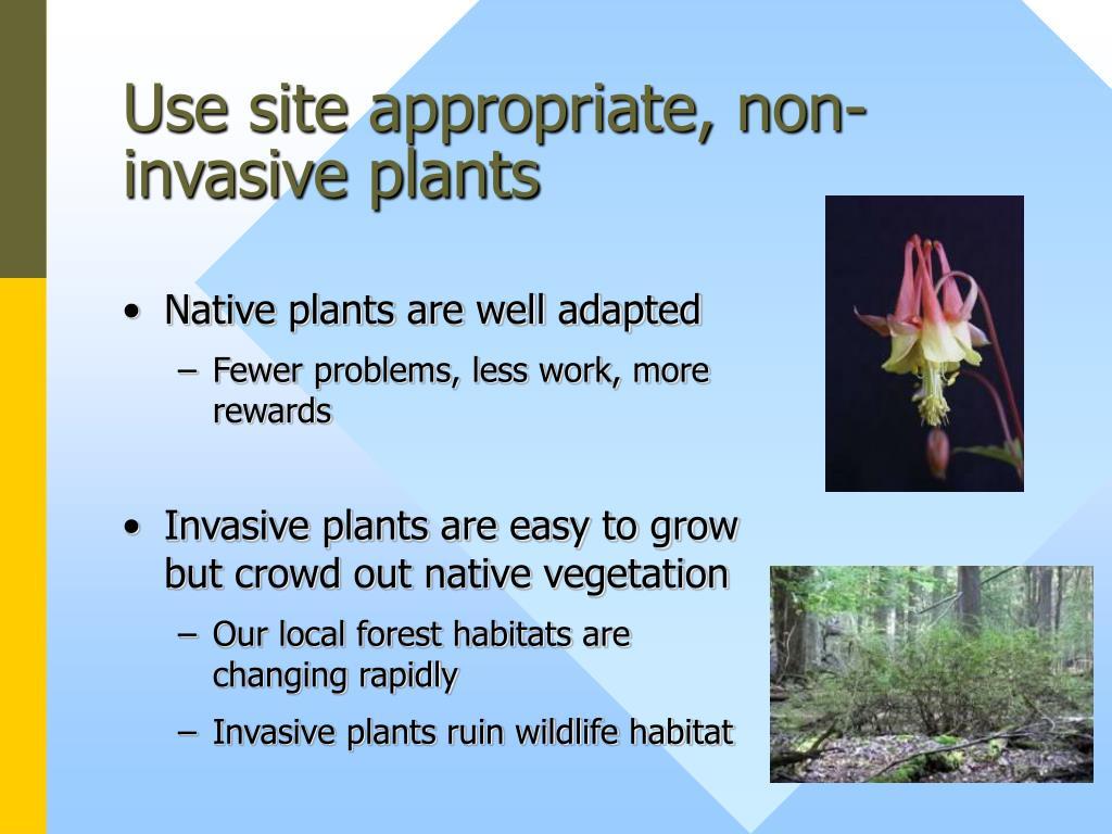 Use site appropriate, non-invasive plants