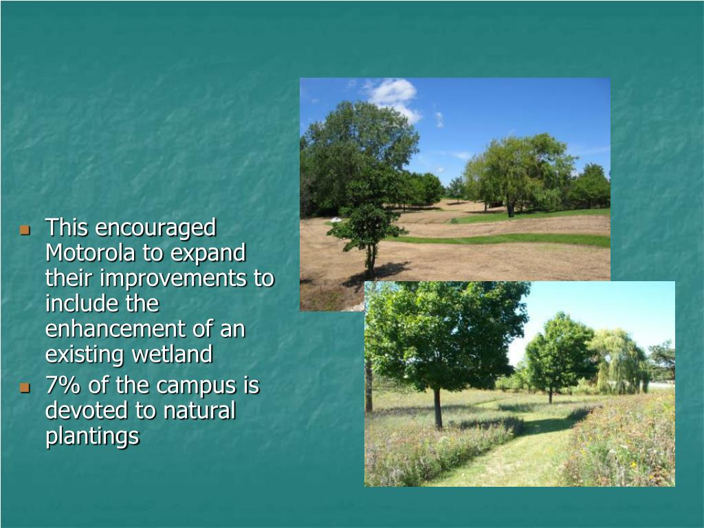 This encouraged Motorola to expand their improvements to include the enhancement of an existing wetland