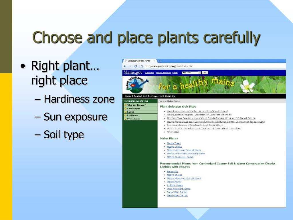 Choose and place plants carefully