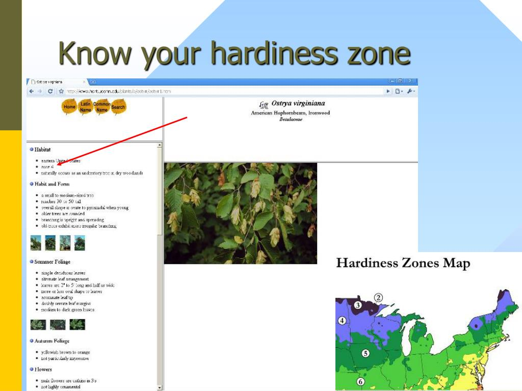 Know your hardiness zone