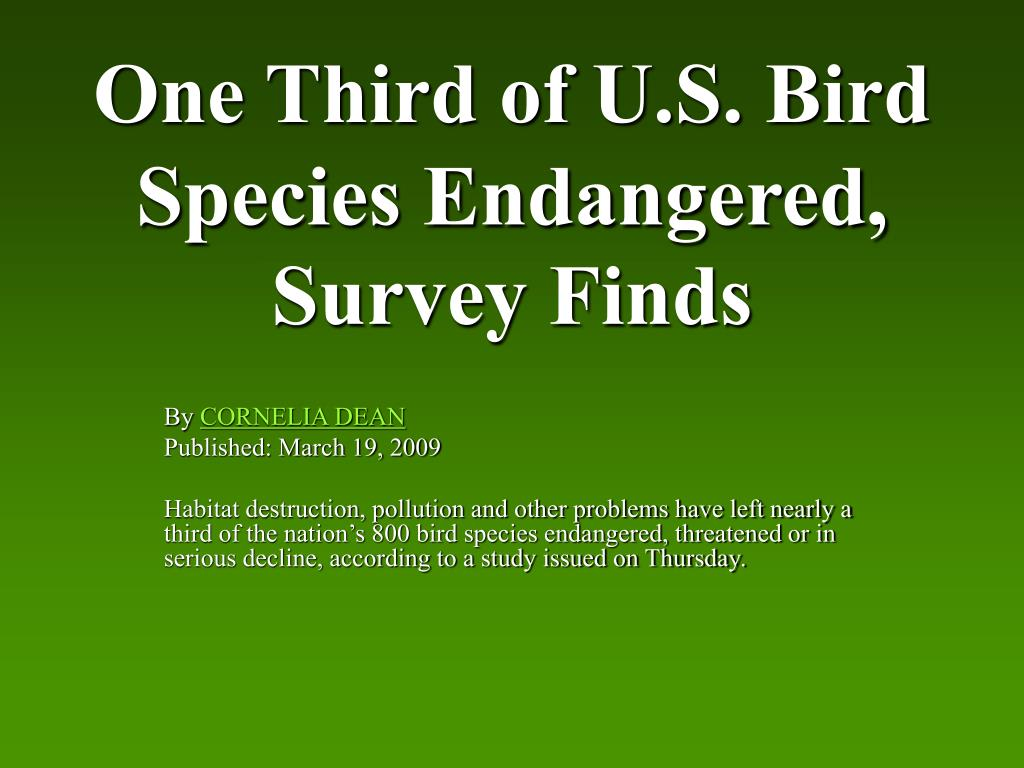 One Third of U.S. Bird Species Endangered, Survey Finds