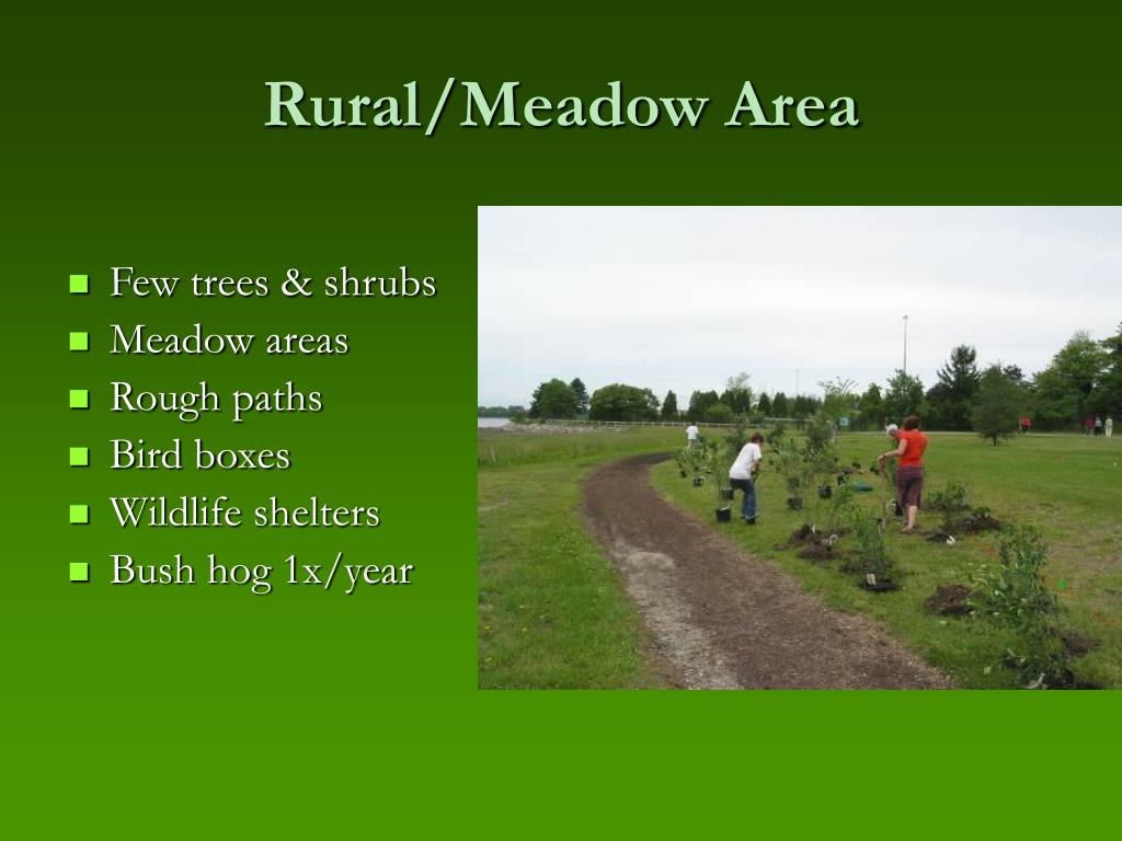 Rural/Meadow Area