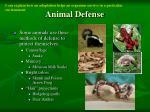 animal defense