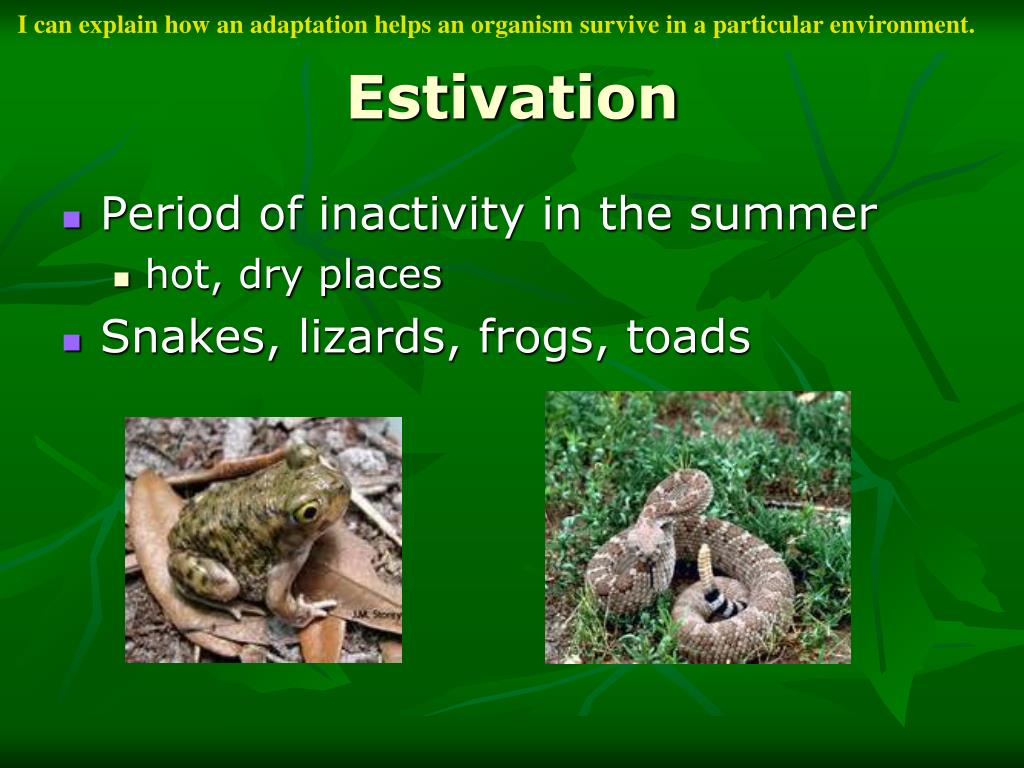 I can explain how an adaptation helps an organism survive in a particular environment.