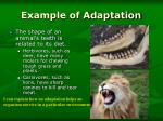 example of adaptation