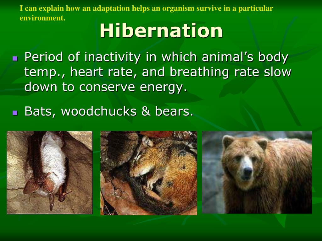 Period of inactivity in which animal's body temp., heart rate, and breathing rate slow down to conserve energy.
