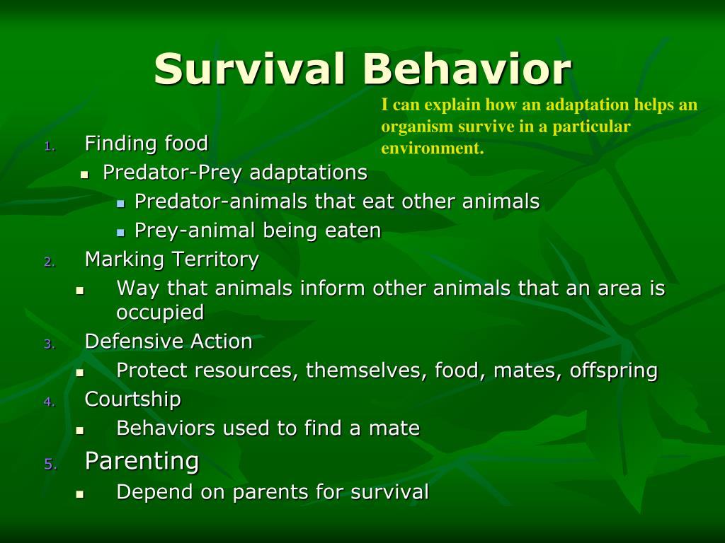 Survival Behavior