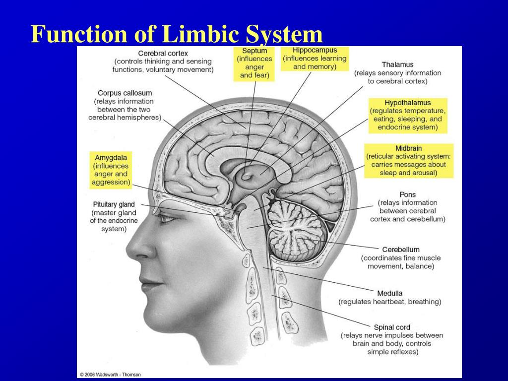 Function of Limbic System