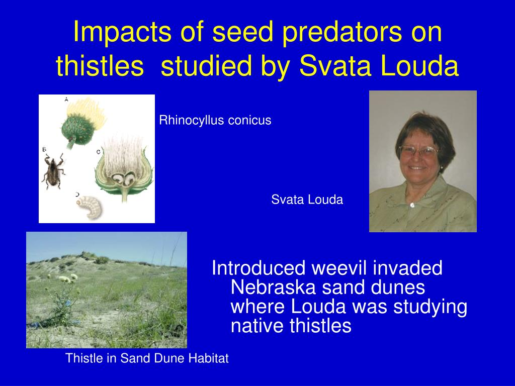 Impacts of seed predators on thistles  studied by Svata Louda