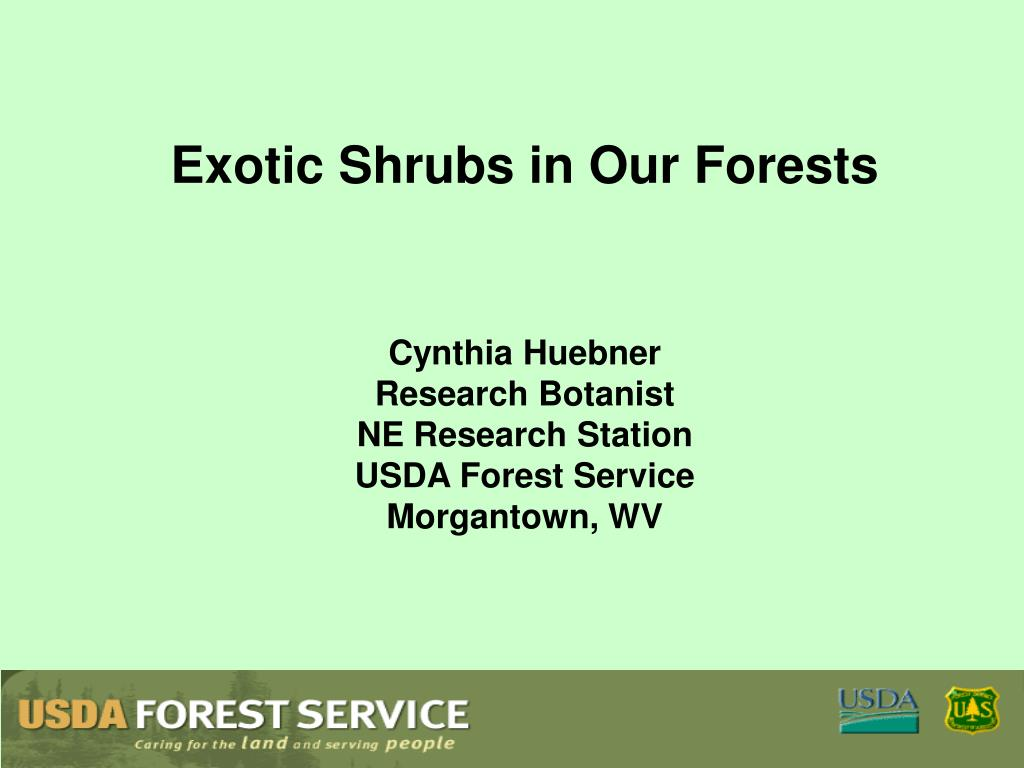 Exotic Shrubs in Our Forests