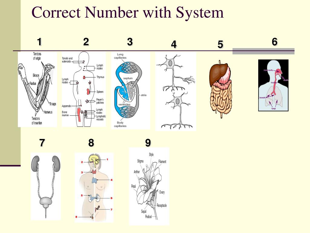 Correct Number with System