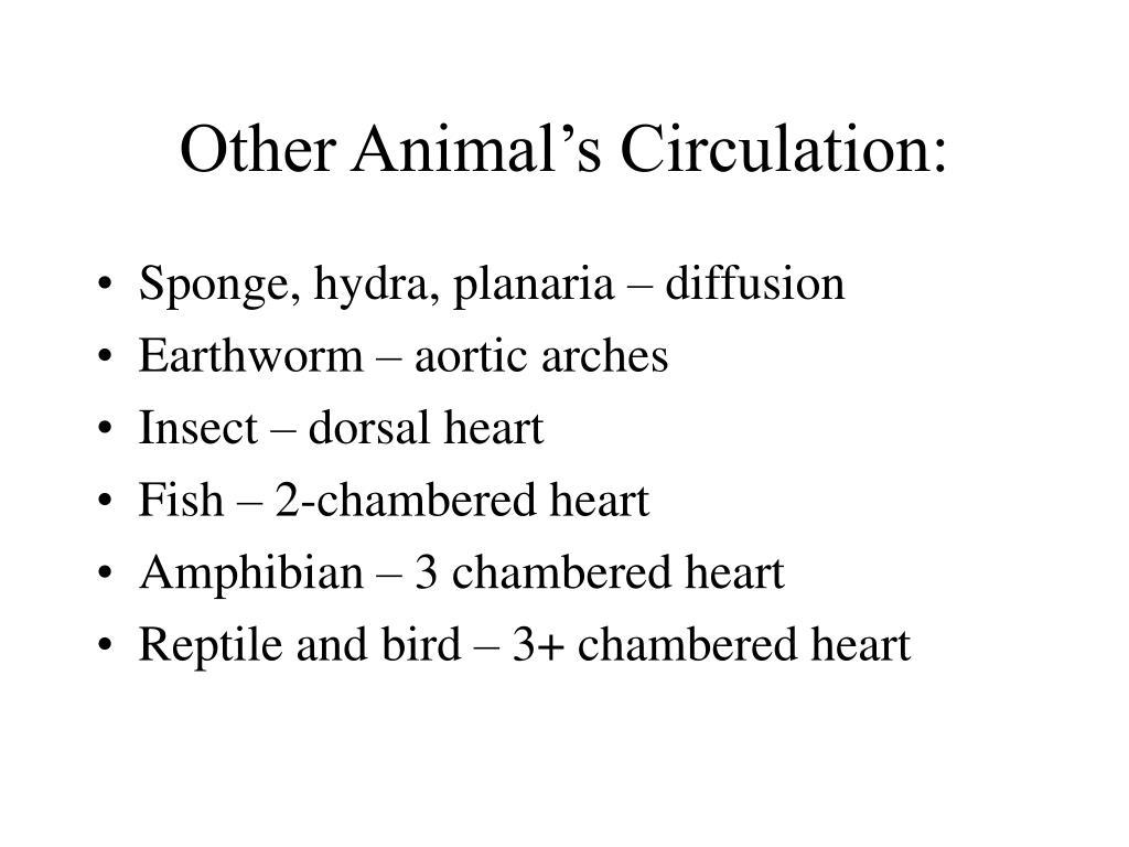Other Animal's Circulation: