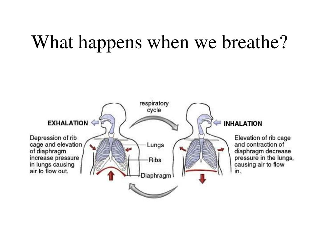 What happens when we breathe?