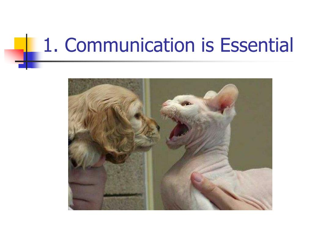 1. Communication is Essential