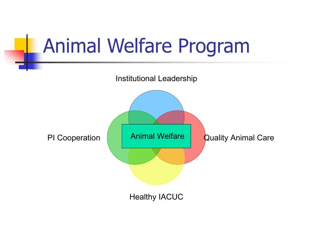 Animal Welfare Program