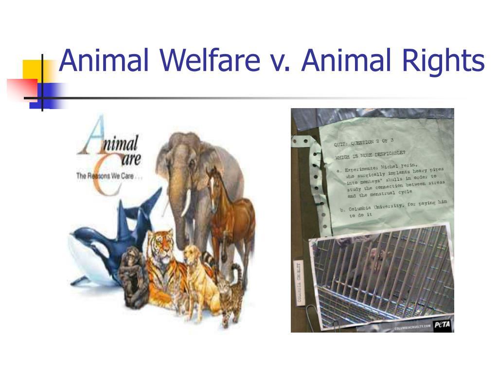 Animal Welfare v. Animal Rights