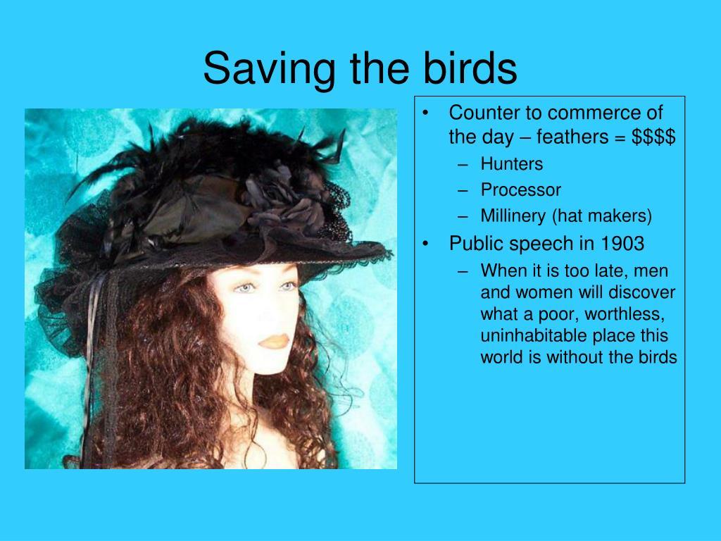 Saving the birds