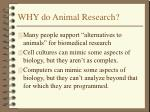 why do animal research6