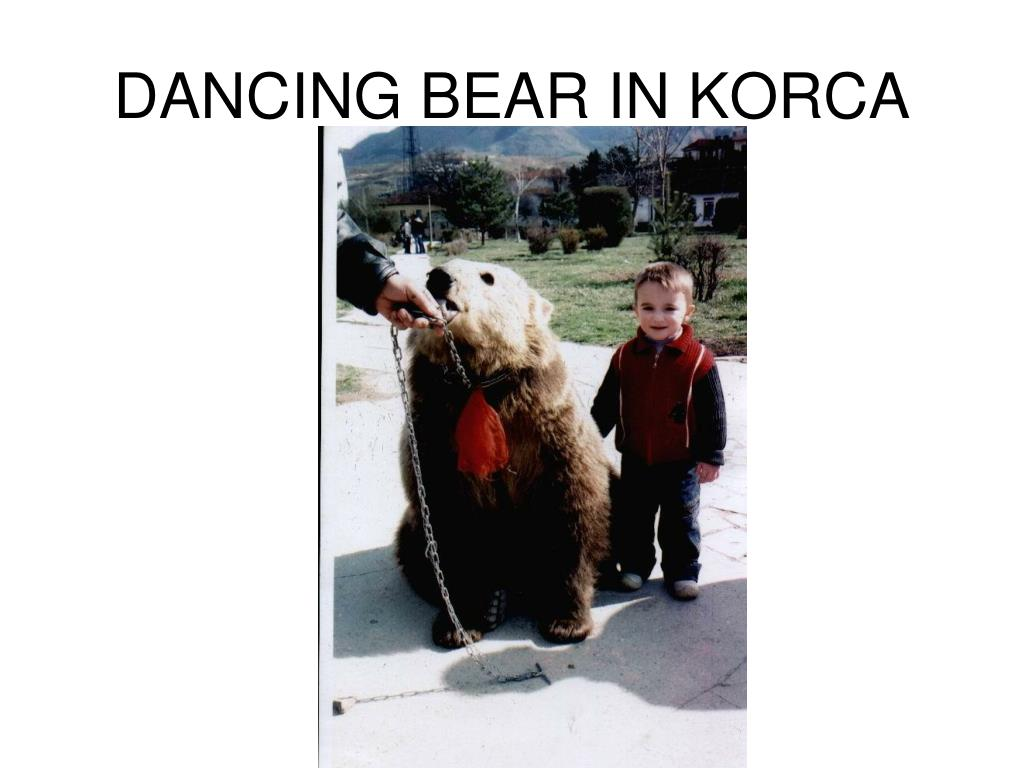 DANCING BEAR IN KORCA