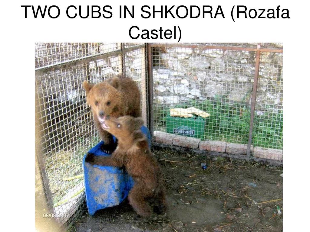 TWO CUBS IN SHKODRA (Rozafa Castel)