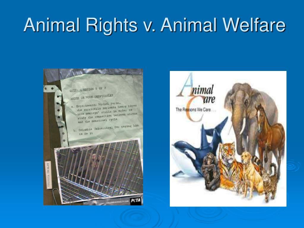 Animal Rights v. Animal Welfare