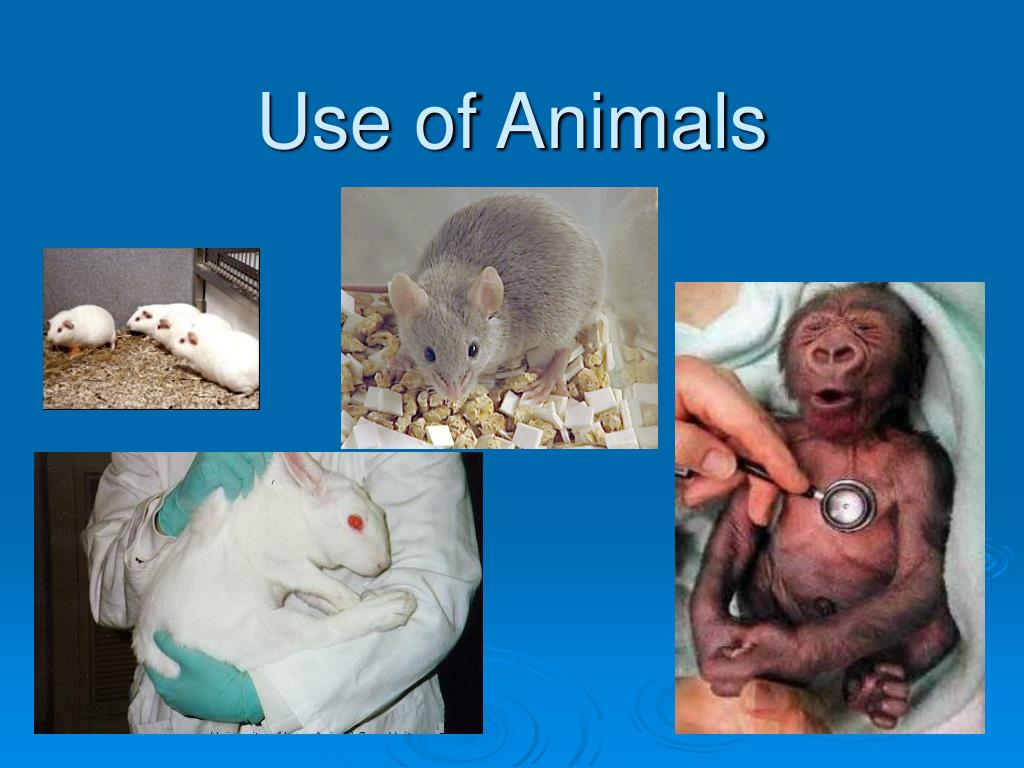 Use of Animals