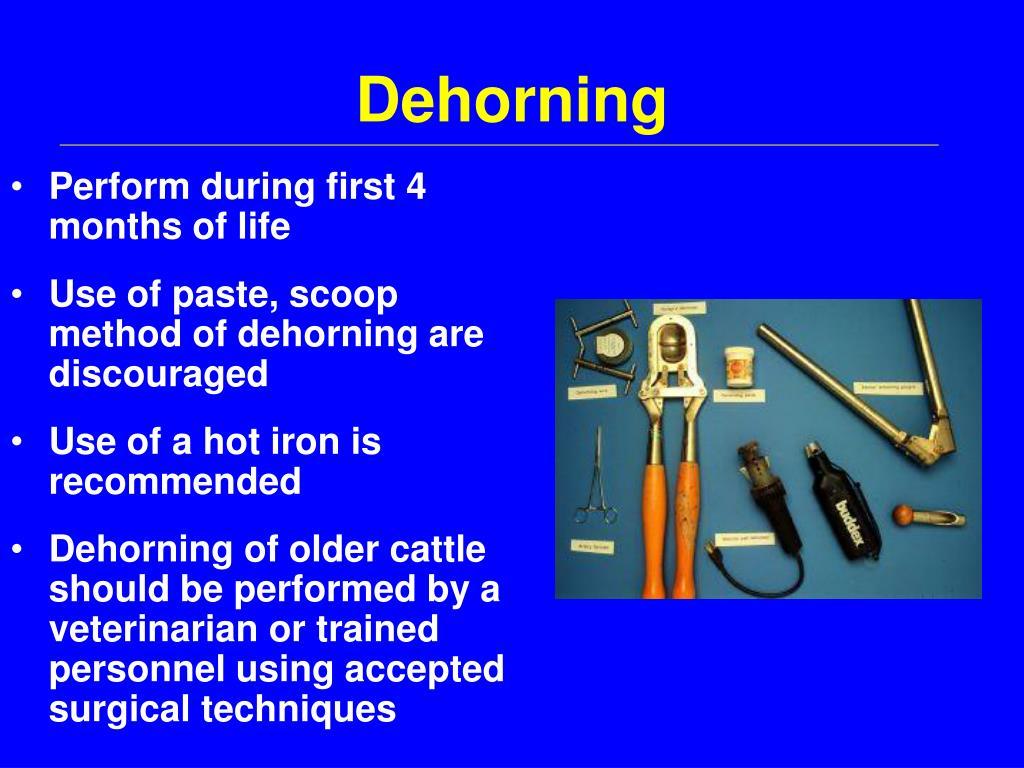 Dehorning