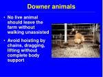 downer animals